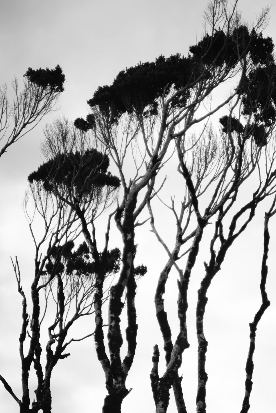 Coastline trees - RAW available Bare Tree Beauty In Nature Blackandwhite Branch Day Eye4photography  EyeEm Nature Lover Growth Low Angle View Nature No People Outdoors Silhouette Sky Sony A6000 The Purist (no Edit, No Filter) Tranquility Tree Art Is Everywhere