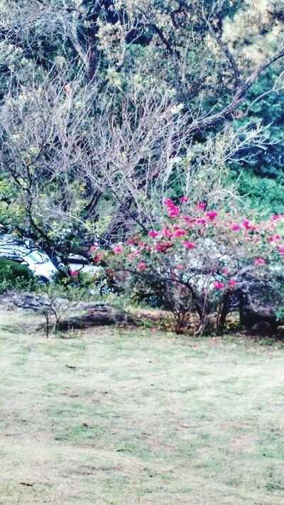 Flores de inverno Brasil. Jardan Contemplation Garden Nature Flowers Relaxing