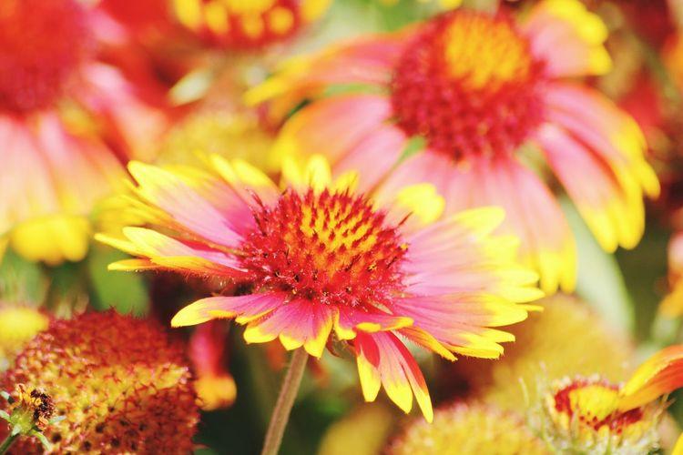 Fleurs Flowers Photography