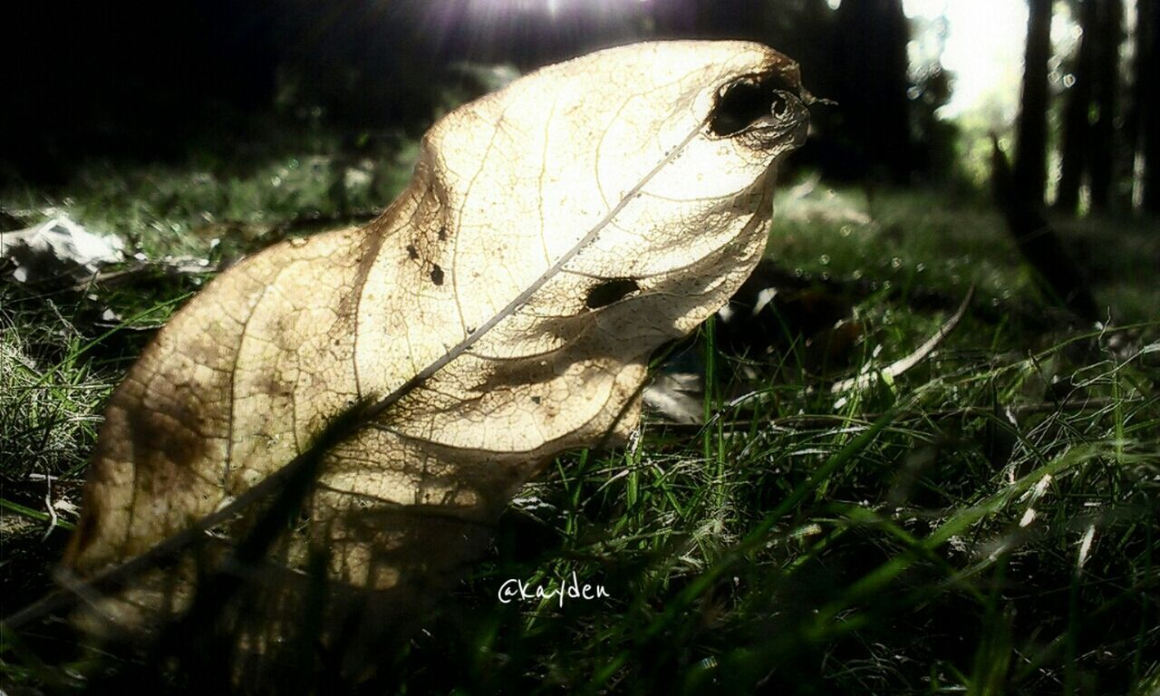 leaf, close-up, dry, grass, autumn, focus on foreground, change, field, day, nature, leaf vein, outdoors, fragility, fallen leaf, tranquility, botany