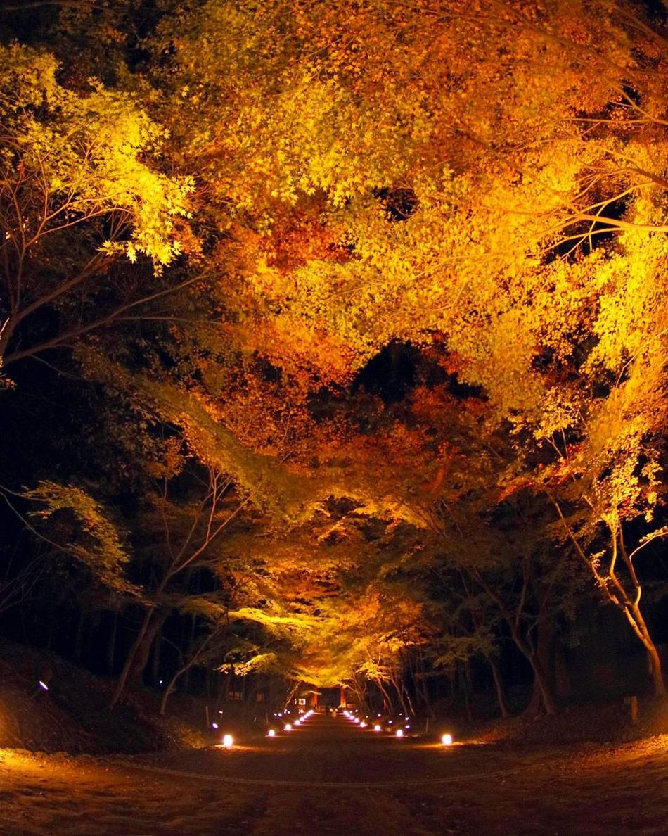 Night Outdoors Autumn Leaves Beauty In Nature Japan Autumn Colors Autumn🍁🍁🍁 Autumn 2016 Kyoto Lightup Lightup Event Backgrounds Maple Leaf Tenple Daigojitemple カメラ好きな人と繋がりたい カメラ女子 ファインダー越しの私の世界 写真撮ってる人と繋がりたい