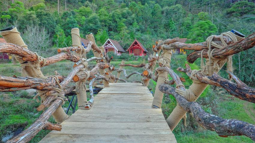 Outdoors Growth Day Nature No People Beauty In Nature Tree Dalat - Vietnam Bridge