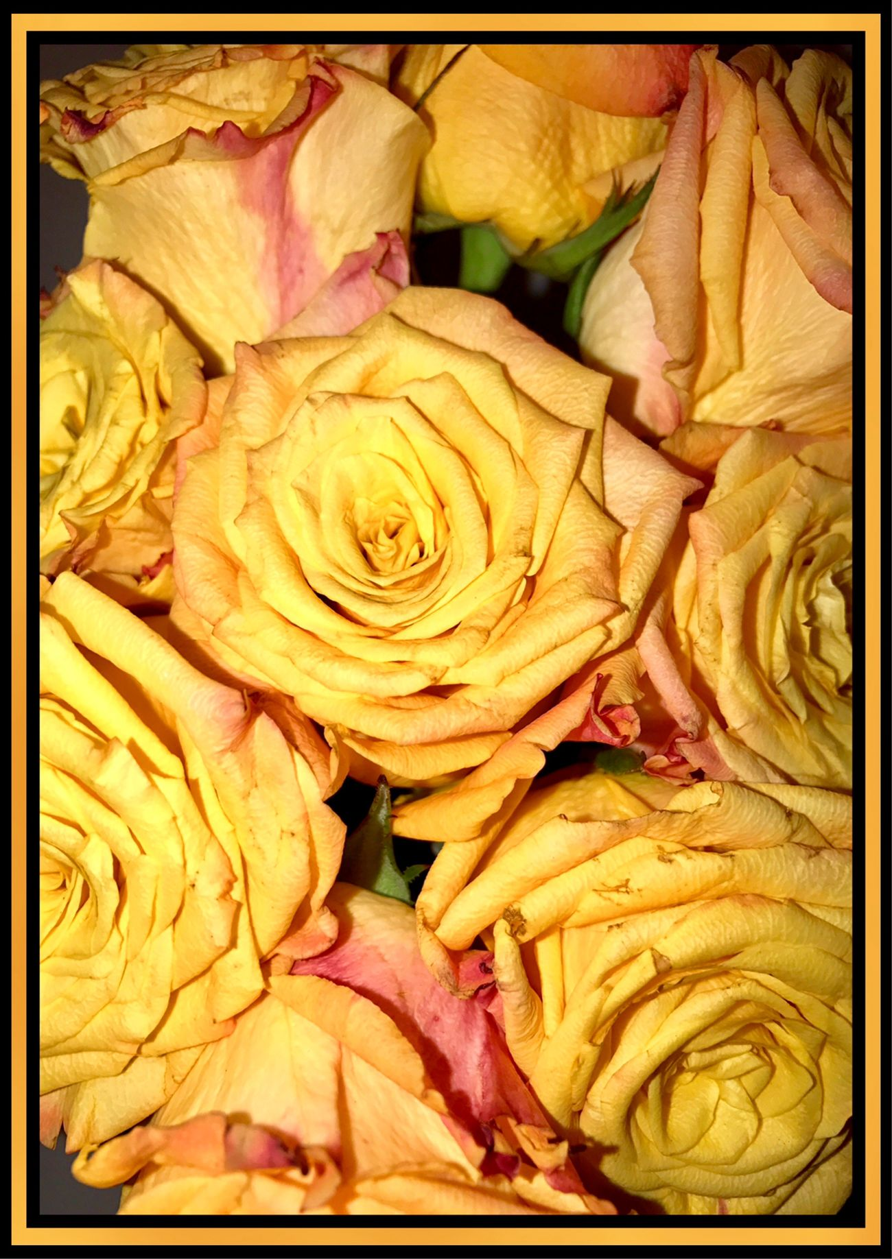 Roses 🌹🍃🌹 Roses Orange Rose Bouquet Gift Flower Collection Flowers Of EyeEm Flower Photography 🌹🍃🌹