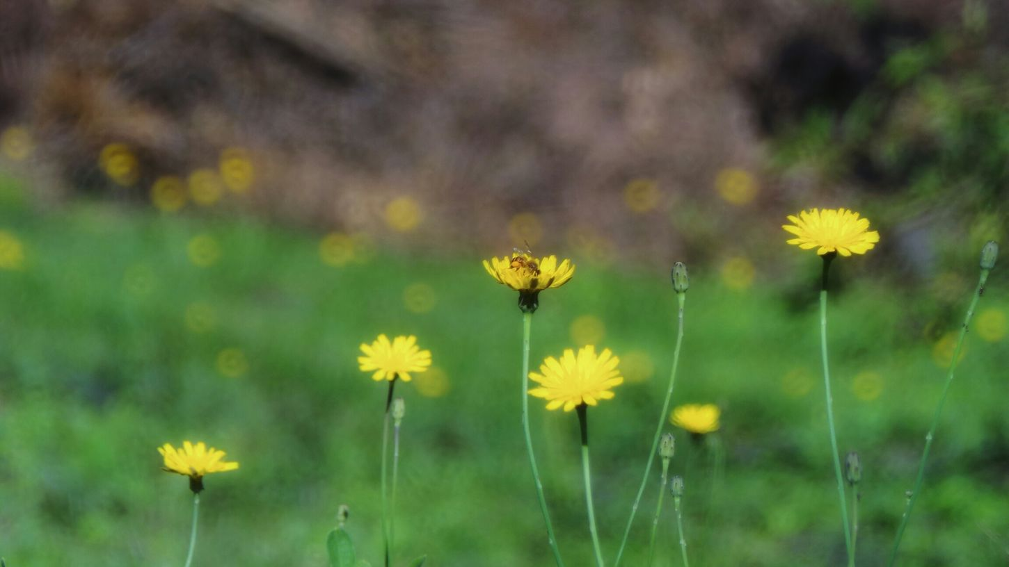 Zoomthelife EyeEm Nature Lover Taking Photos Nature_collection Bees Flower Collection Galaxy Camera Guarne