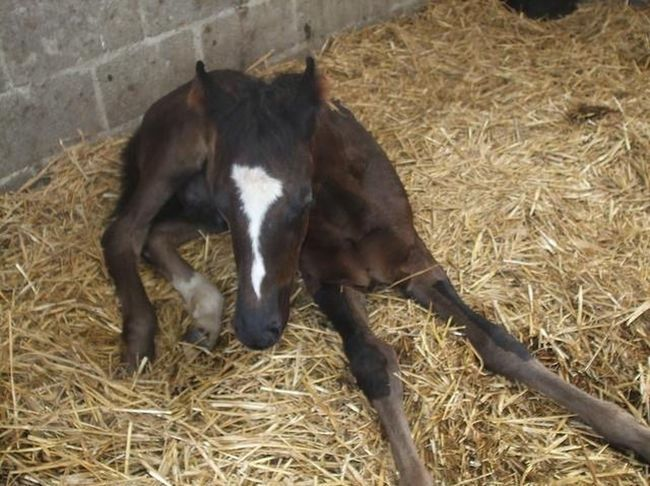 Horse Foal Black Warmblood Companion Equine Equinephotography Gone But Never Forgotten