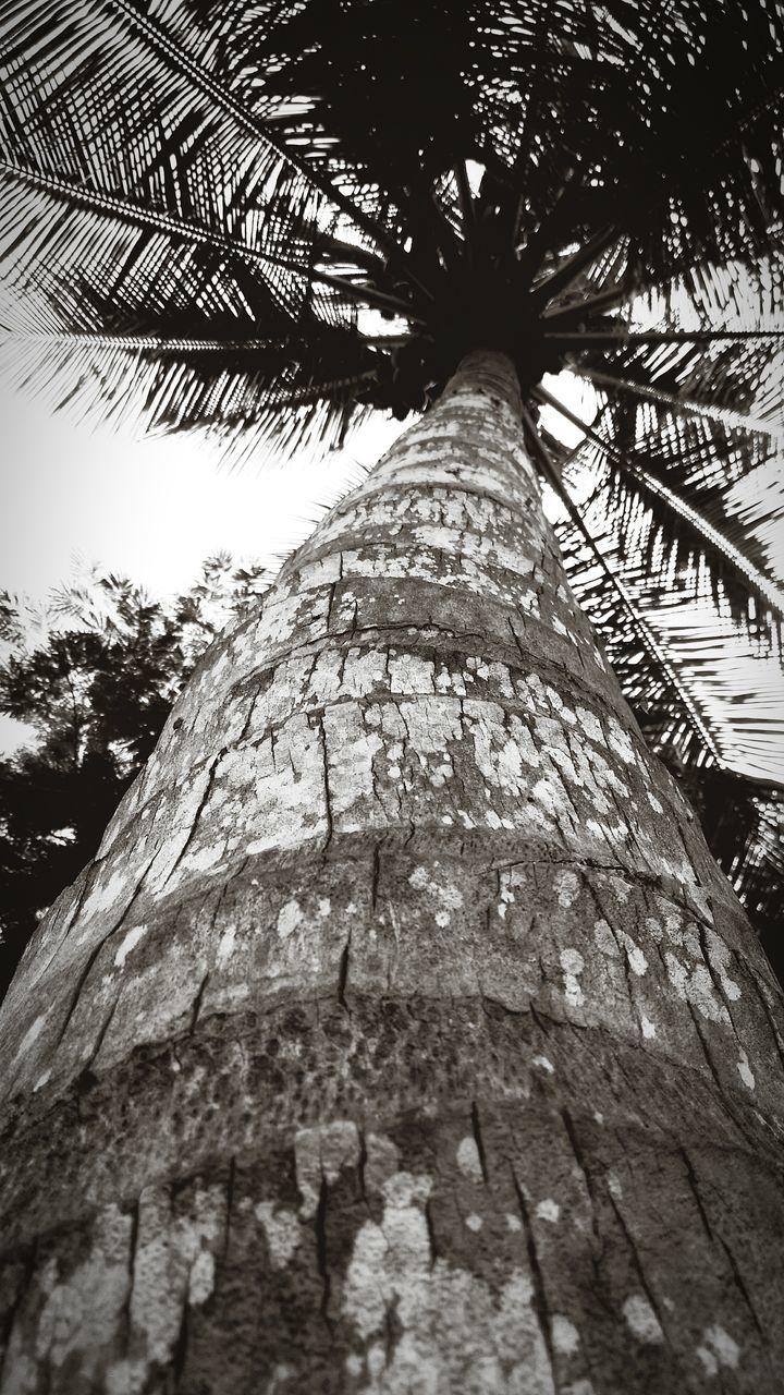 Directly Below Shot Of Palm Tree