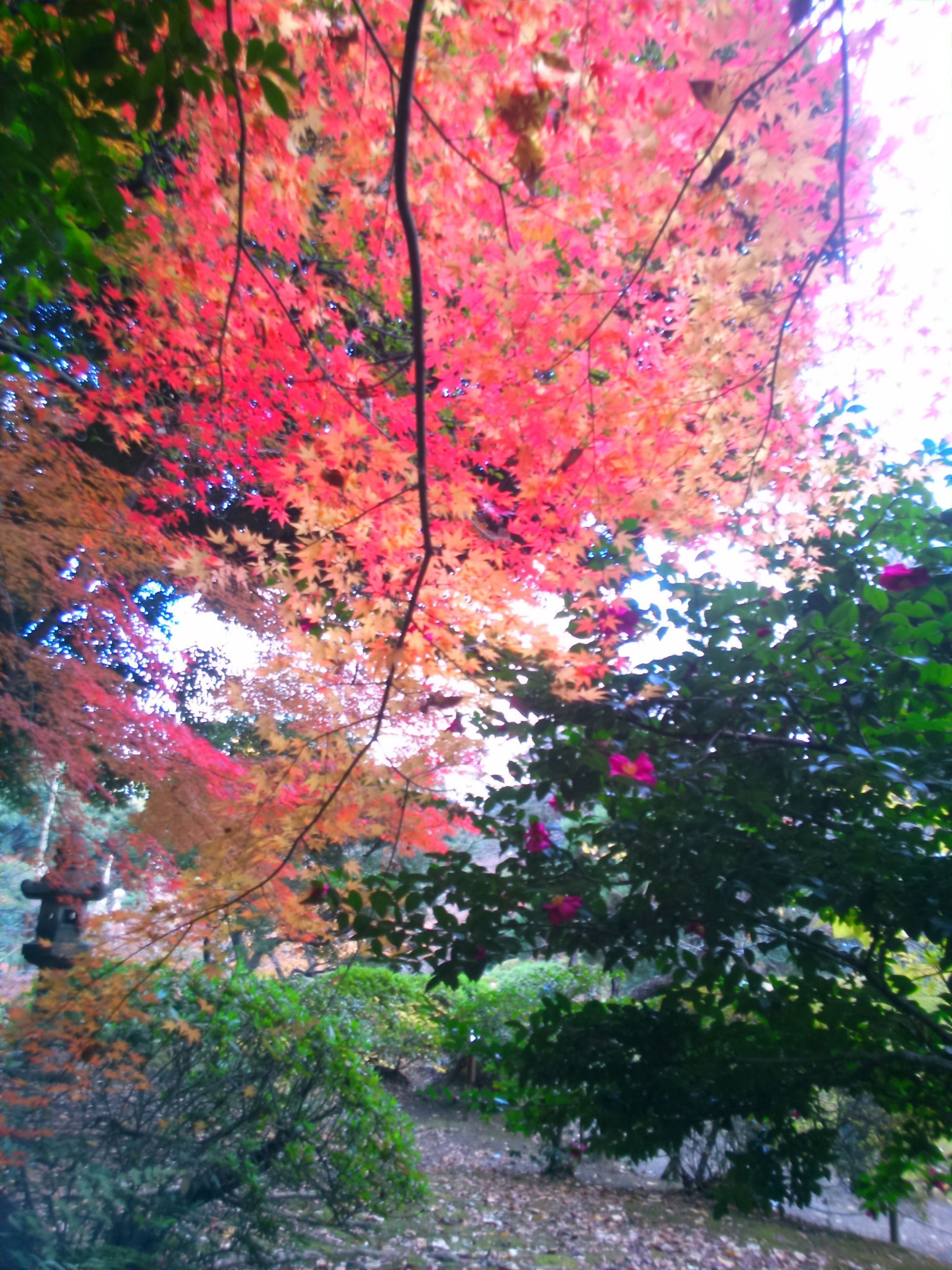 tree, nature, growth, no people, beauty in nature, outdoors, branch, leaf, multi colored, day, scenics, water, sky, close-up