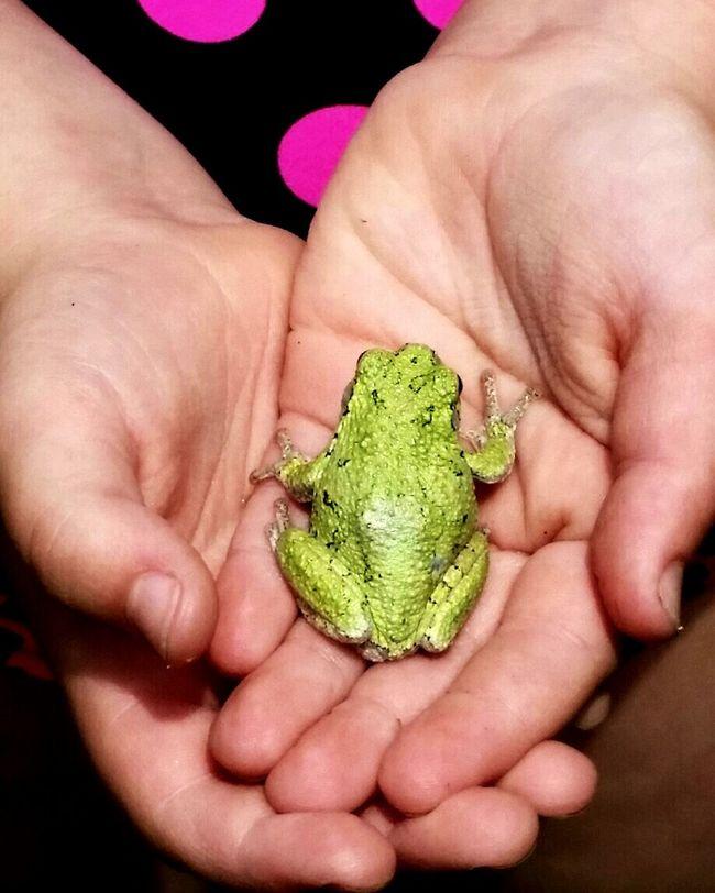 Treefrog Greenfrog Nature Nature_perfection Nature Naturelovers Frog