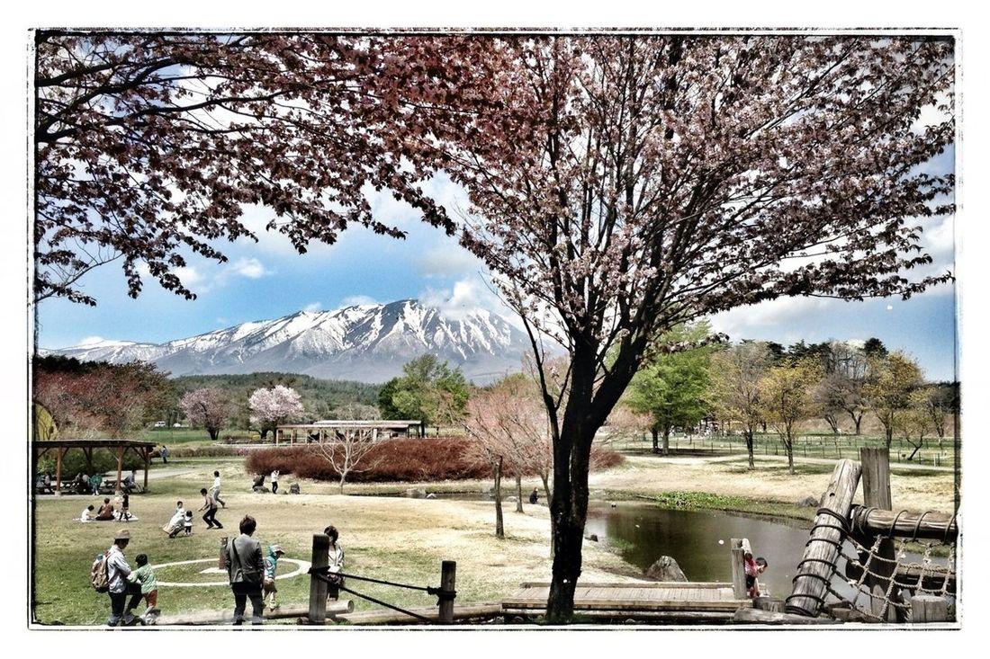 まきば園からの岩手山 IPhoneography Mountains Farm Snapseed