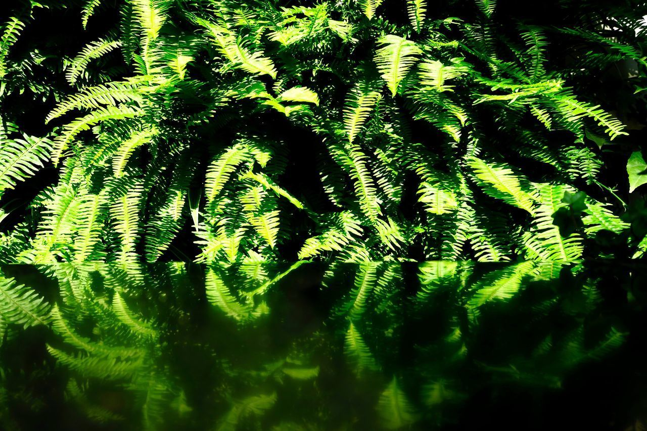 Green Leaf Nature Growth Fern No People Green Color Plant Full Frame Beauty In Nature Day Close-up Outdoors Tree Freshness Taking Photos