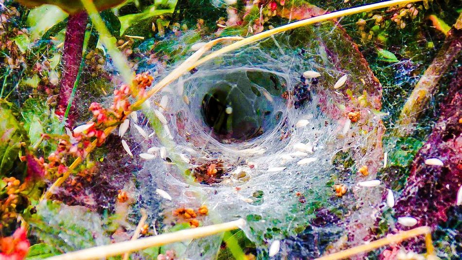 Pivotal Ideas Spiderweb True Colours Of Life Amazing Nature <3 Pure Beauty Neverstopdreaming Never Stop Looking
