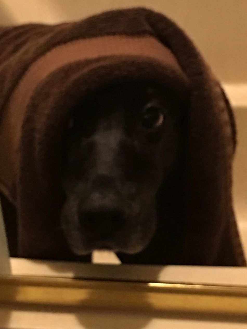 Shower fresh - doggie style!🐶 Looking At Camera Close-up Fur Babies EyeEm Best Shots Eyemphotography
