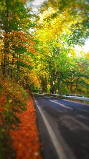 Autumn Colors Relaxing Enjoying Nature Street Piemonte Italia Oropa