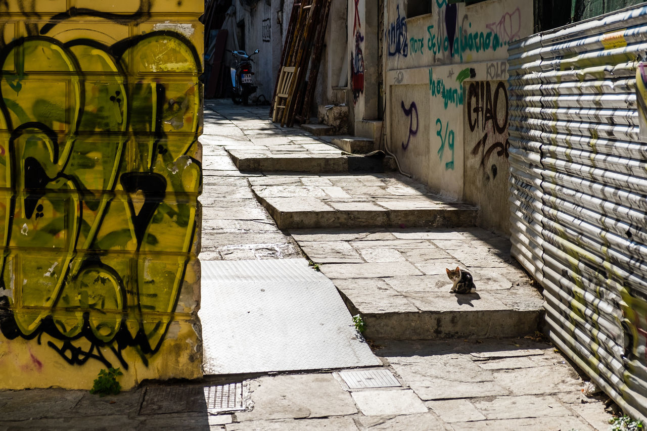 Athens Athens, Greece Cat Graff Greece Grexit Plaka, Athens Street Photography Streetlife Walls Yellow