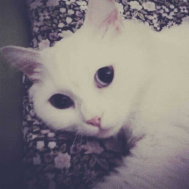 Iyi gecelerrr Benimkedim Maya Mayukhan Goodnight iyigeceler cat kedi sleeping bikedigördümsanki animals candostu kitten instacat uykuu miss ball yolarkadasim petstagram