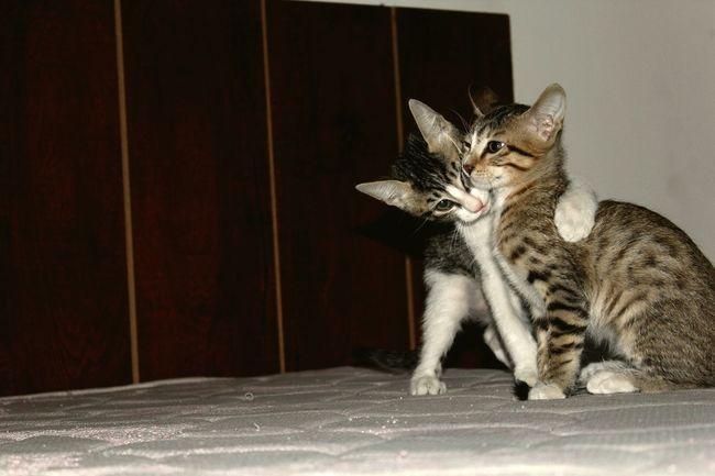 SastaFotu Bharat Cat Cats 🐱 Catlover ♡ in India Animato