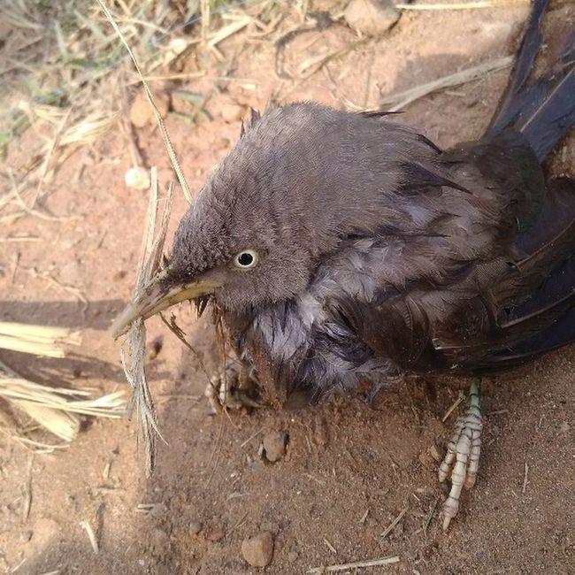 Bird photo Clicked by Raj Kumar Photographer