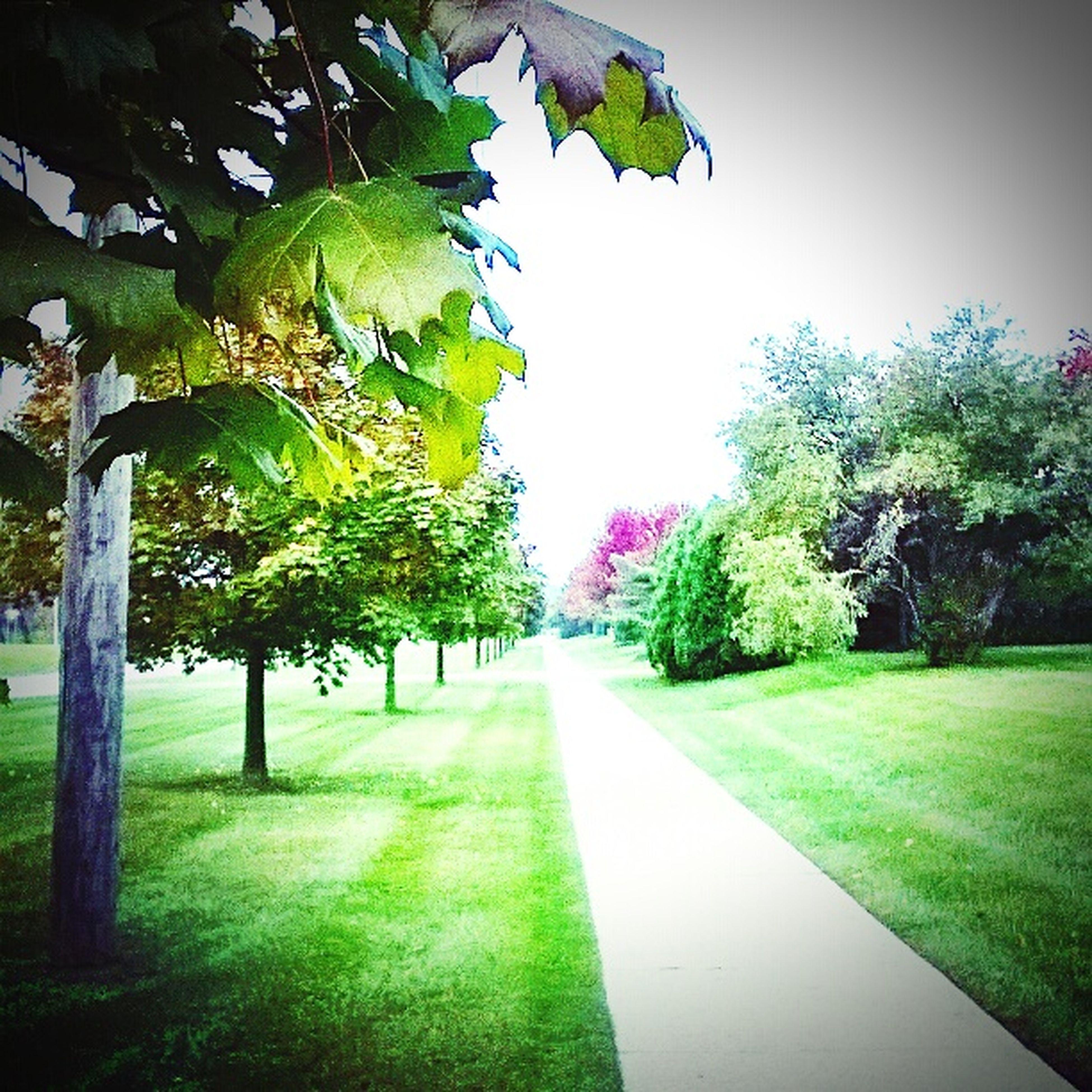 Hello World Walking Beautiful Light Nature