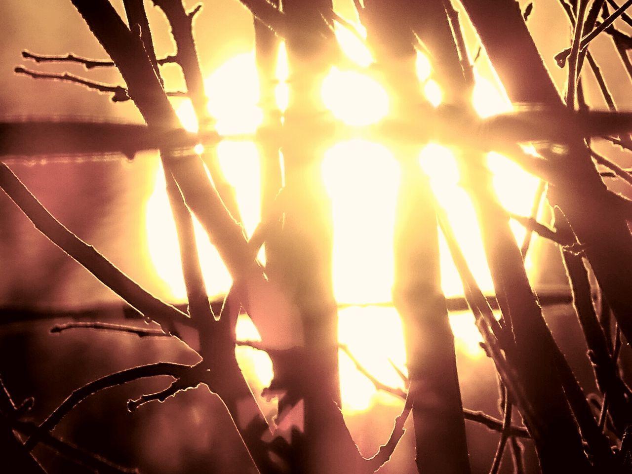 Sun Light Through Trees Sun Light Tree Outline Tree Orange Sun Sunset Nature Backgrounds Enlightening Close-up Sky Beauty In Nature EyeEm Getty Collection EyeEm Gallery Beauty In Nature Outdoors