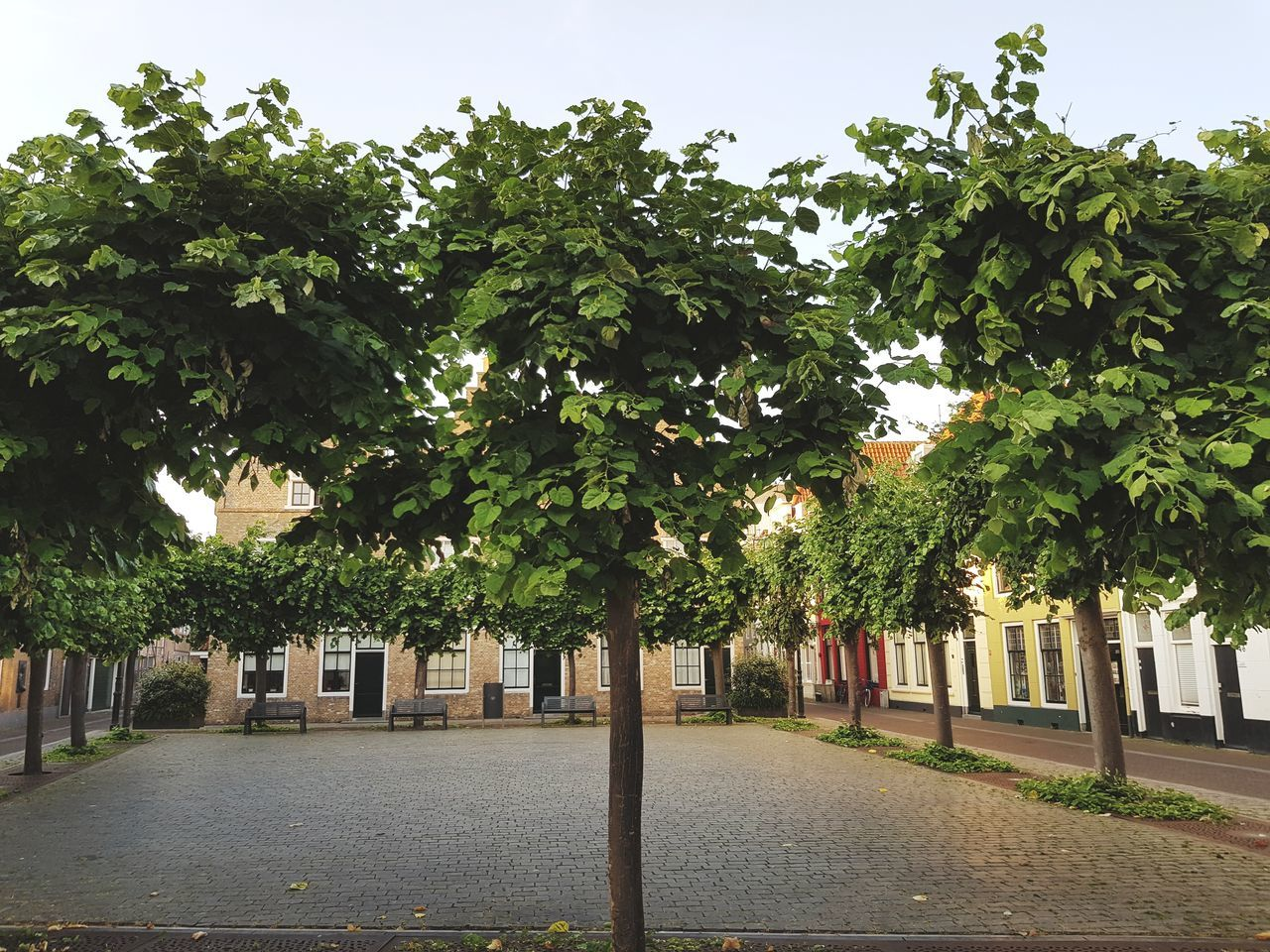 Tree Outdoors No People Building Exterior Architecture Taking Photos Taking Pictures Eye4photography  City Built Structure Dutch Architecture Dutch Cities Dutchphotographer Travel Destinations Dutch House Trees Tree_collection  Dutch Life Square Cozy Place Brickstones Greenery Exploring New Ground Zen City Street