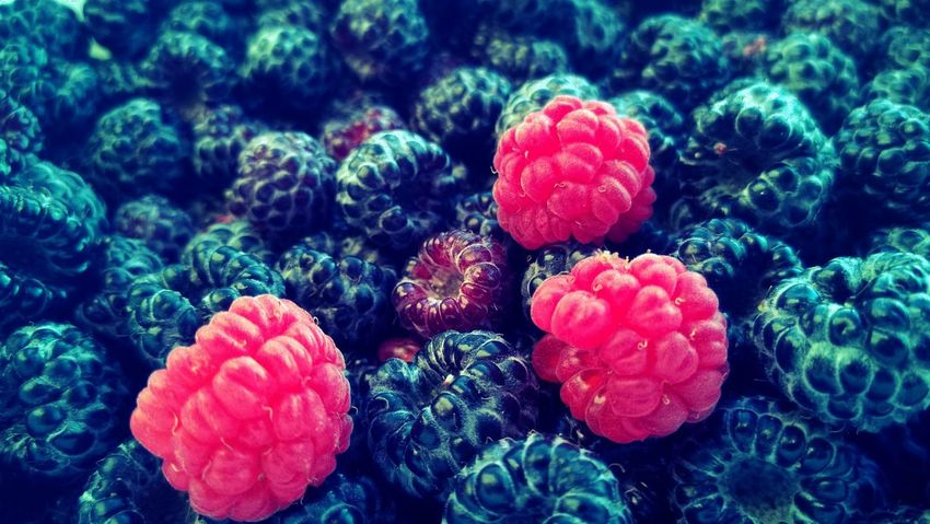 Berry contrast Red Nature Freshness Healthy Eating Beauty In Nature