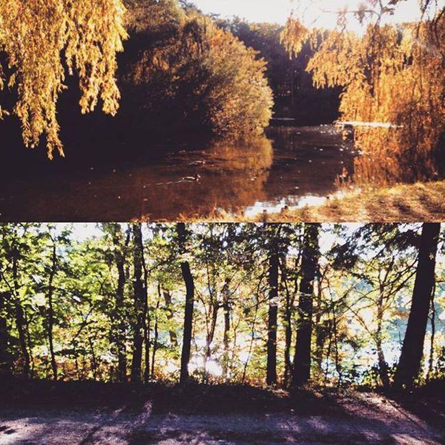 Ostatnia Jazda Chyba 50 Bike MTB Lake Autumn Szczecin Poland Sport Bede Chory Nature Water Green October Goodnight