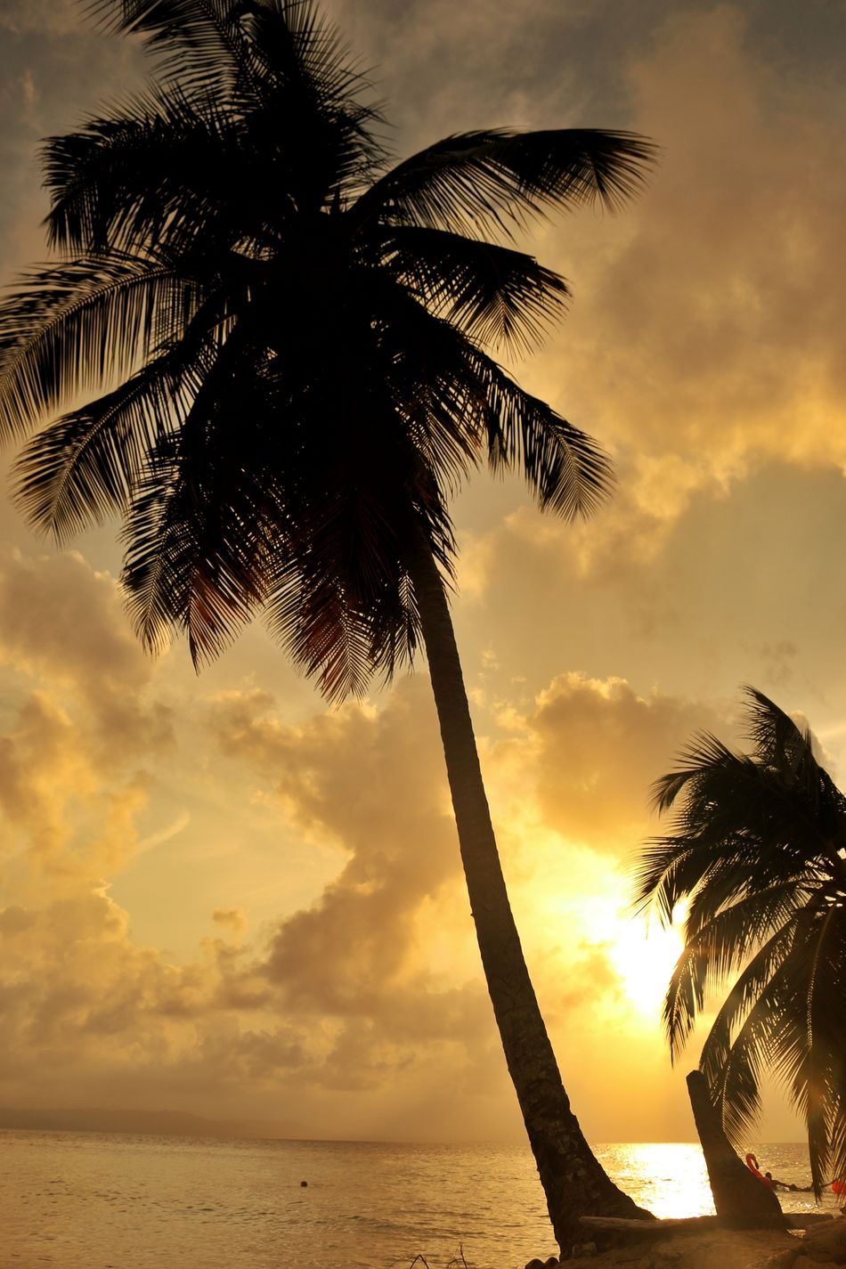 Sunset Sea Nature Tree No People Sky Outdoors Sunlight Palm Tree Summer Vacations Water Beach Sun Backgrounds Day Sunset_collection Palms Trees Palms Palmeras Caribe,paraiso Romantic Sky Photoshoot Photography Sunlight