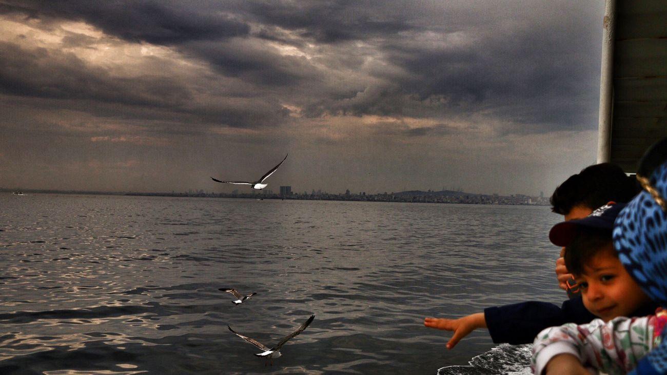 Günaydın herkese Seagulls View Vapur Ve İstanbul Martilar