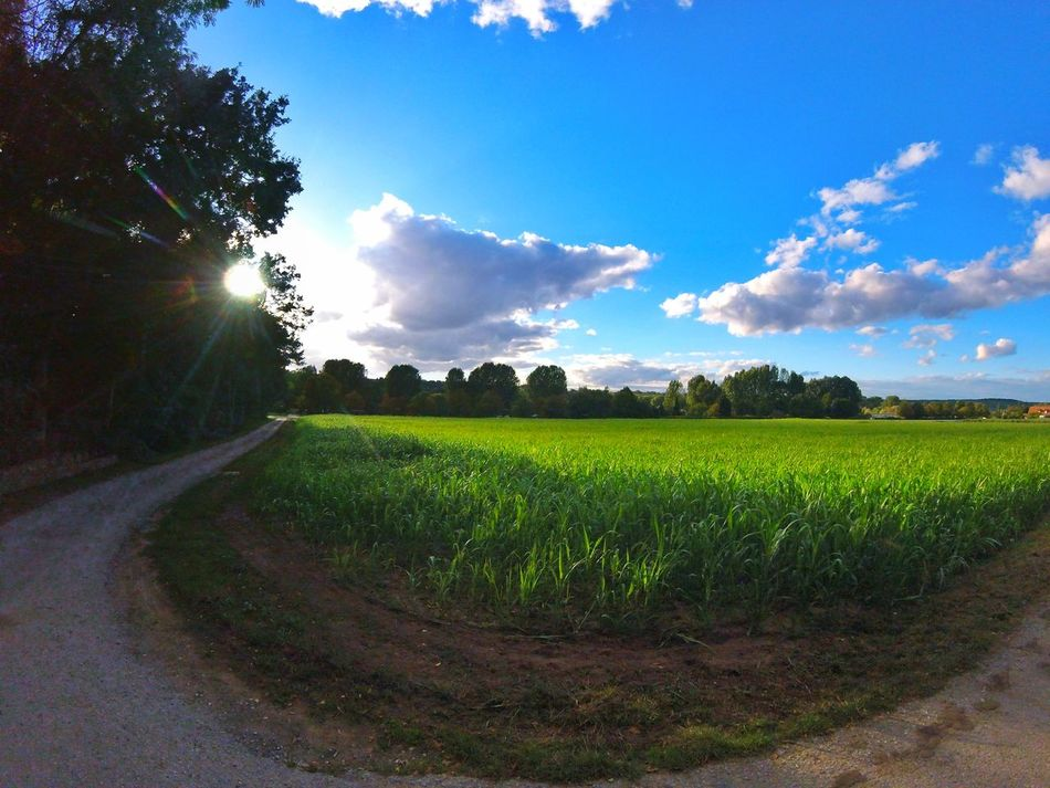 Gopro Session Goprooftheday Goprohero4 Goprophotography Sunshine Sun Snapseed Street Green Grass Trees And Sky Trees Tree Gopro EyEmNewHere