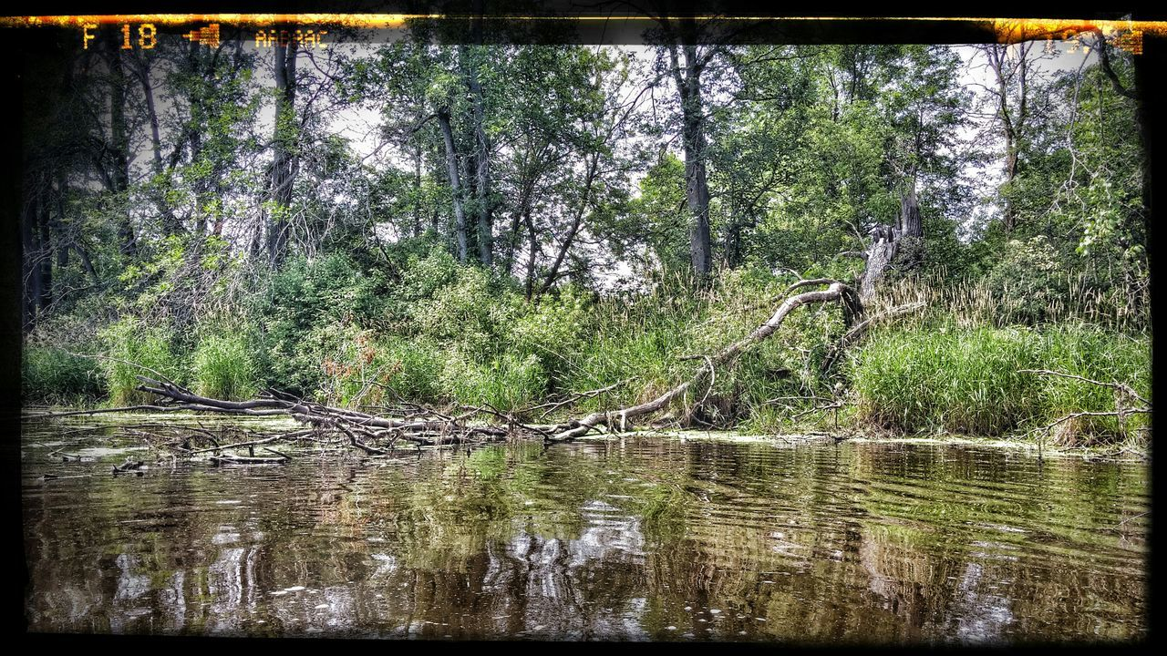 Nature On Your Doorstep Sheboygan River in St. Cloud, WI, taken while kayaking July 3, 2015