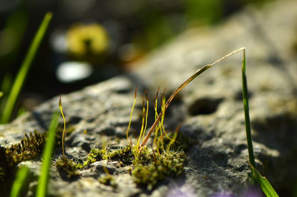 Nature Close-up Outdoors No People Day Moss Moss On Rock Mossy Growth Detail Simplicity Macro Macro Nature Nature_collection Garden Photography Freshness Fragility Botany Plant Beauty In Nature Low Angle View Microcosm Spring Sunny New Life
