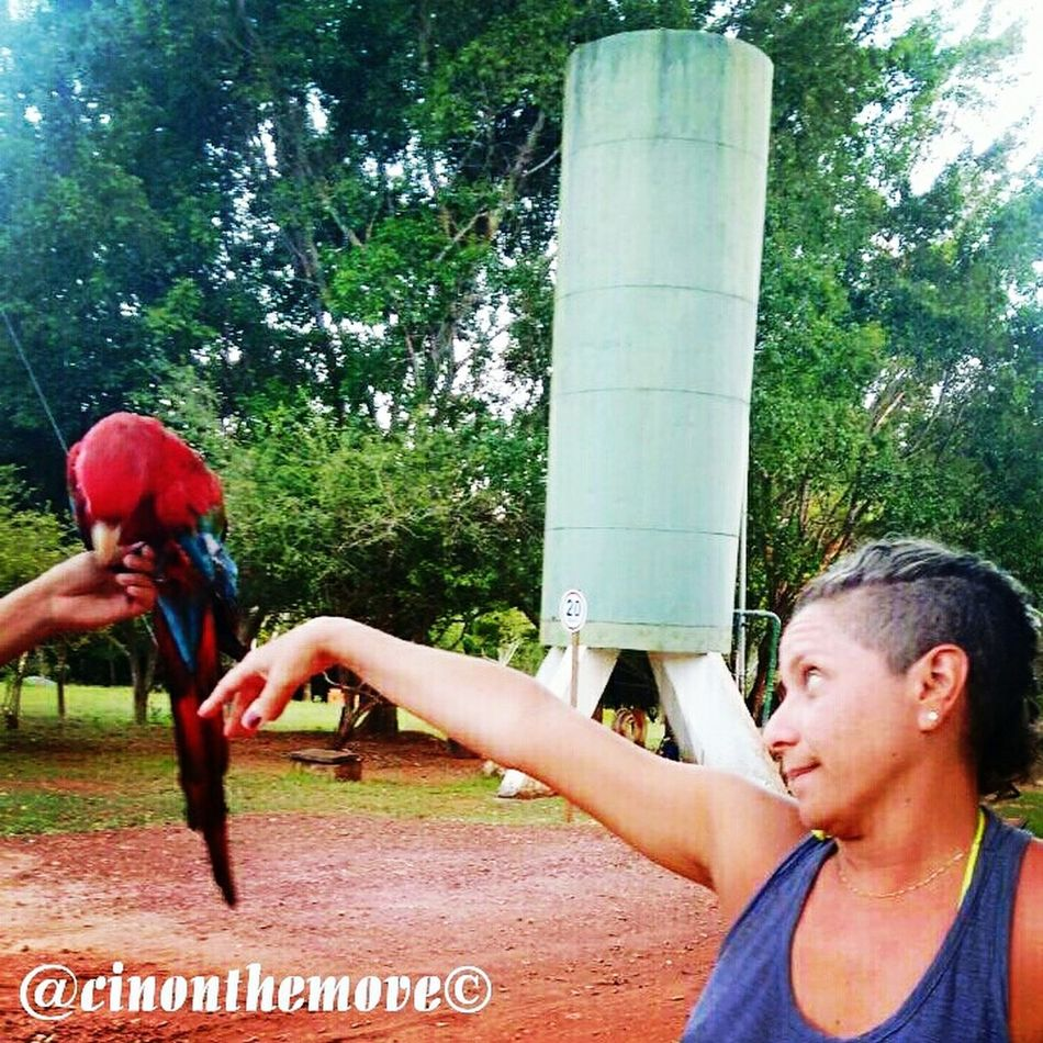 Healthy Lifestyle Real People Outdoors Day Macaw Macaw Parrot Fun Funny Nature Nature_collection Naturephotography Animal Animallovers Traveling Travelphotography Naturelovers Everyday Joy Teenager Young Adult People Tree Adults Only Athlete Adult Track And Field Athlete