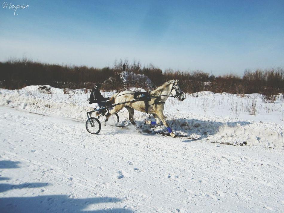 Рысистые бега в Нижней Салде от 01.03.2015.