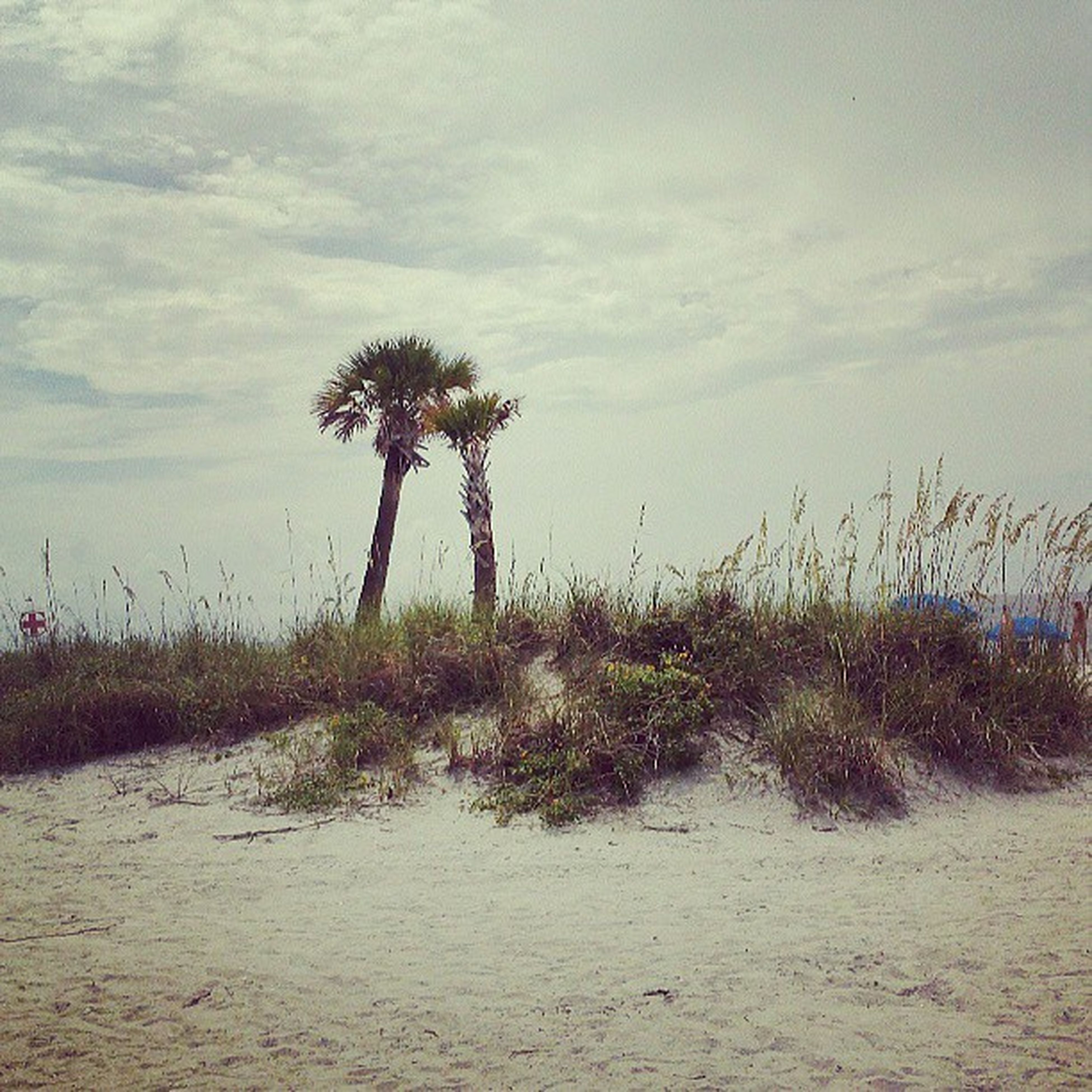 palm tree, tranquility, sky, tranquil scene, tree, growth, nature, beauty in nature, scenics, cloud - sky, landscape, water, grass, cloud, plant, beach, field, day, no people, outdoors