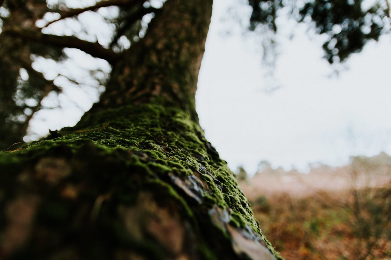 Tree Nature Growth Tree Trunk Low Angle View Tranquility Beauty In Nature No People Green Color Sky Outdoors Day Branch Close-up Forest Hello World Photography EyeEm Best Shots Scenics EyeEm Nature Lover Nature_collection The Week Of Eyeem Beautiful Check This Out Beauty In Nature