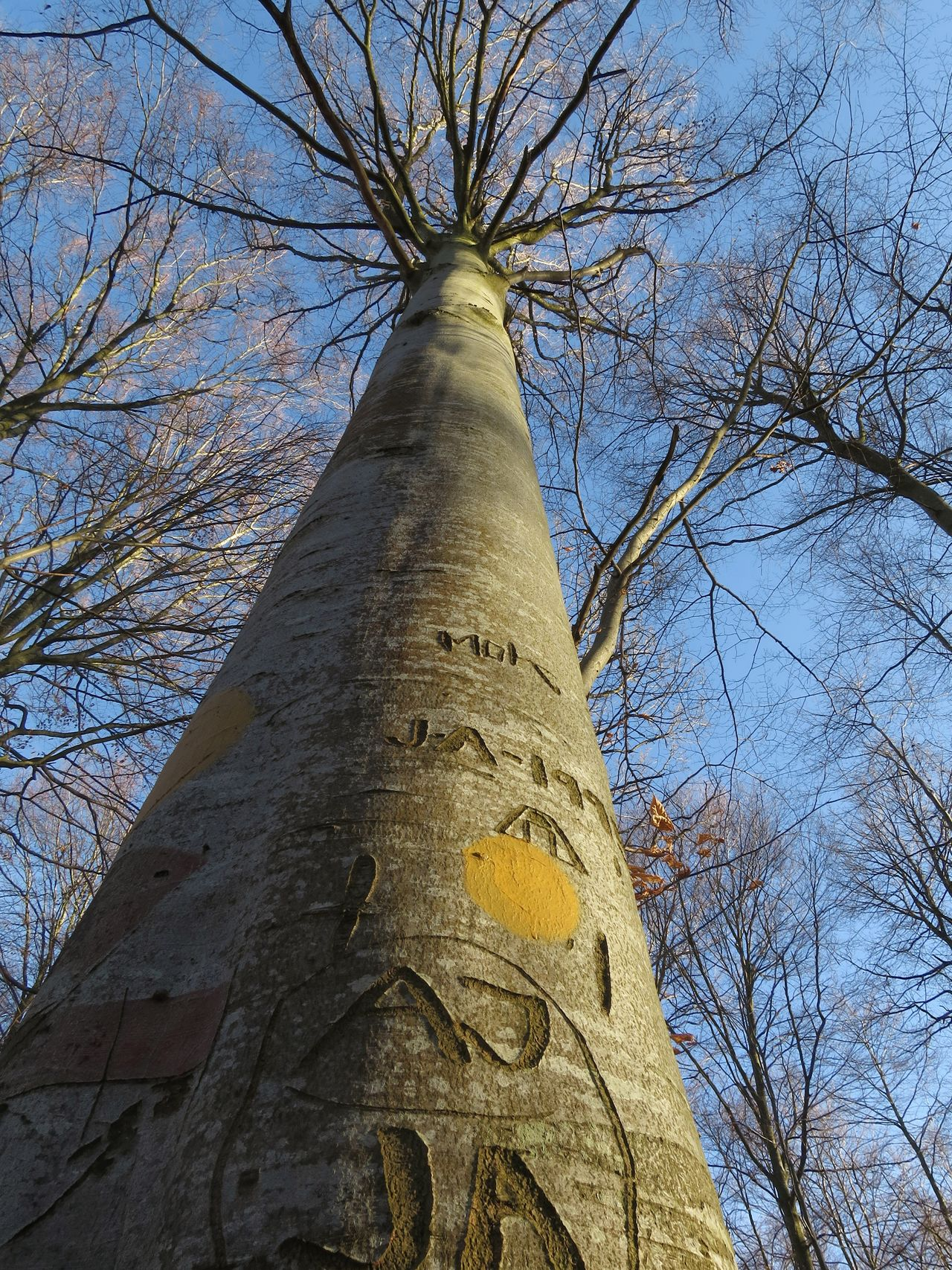 Tree Low Angle View Blue Sky Sky Nature Forest February Walking Outdoors Engraved Wood Branches And Sky