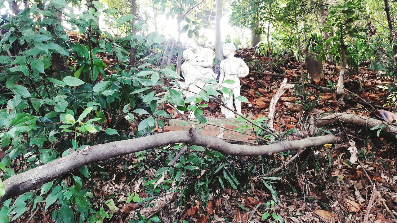 Quando a arte se encontra com a natureza. Fotografia Brazil Dreams Sonhar Photography Piracicaba Art Photography Art Artist Nature Natureza Escultura