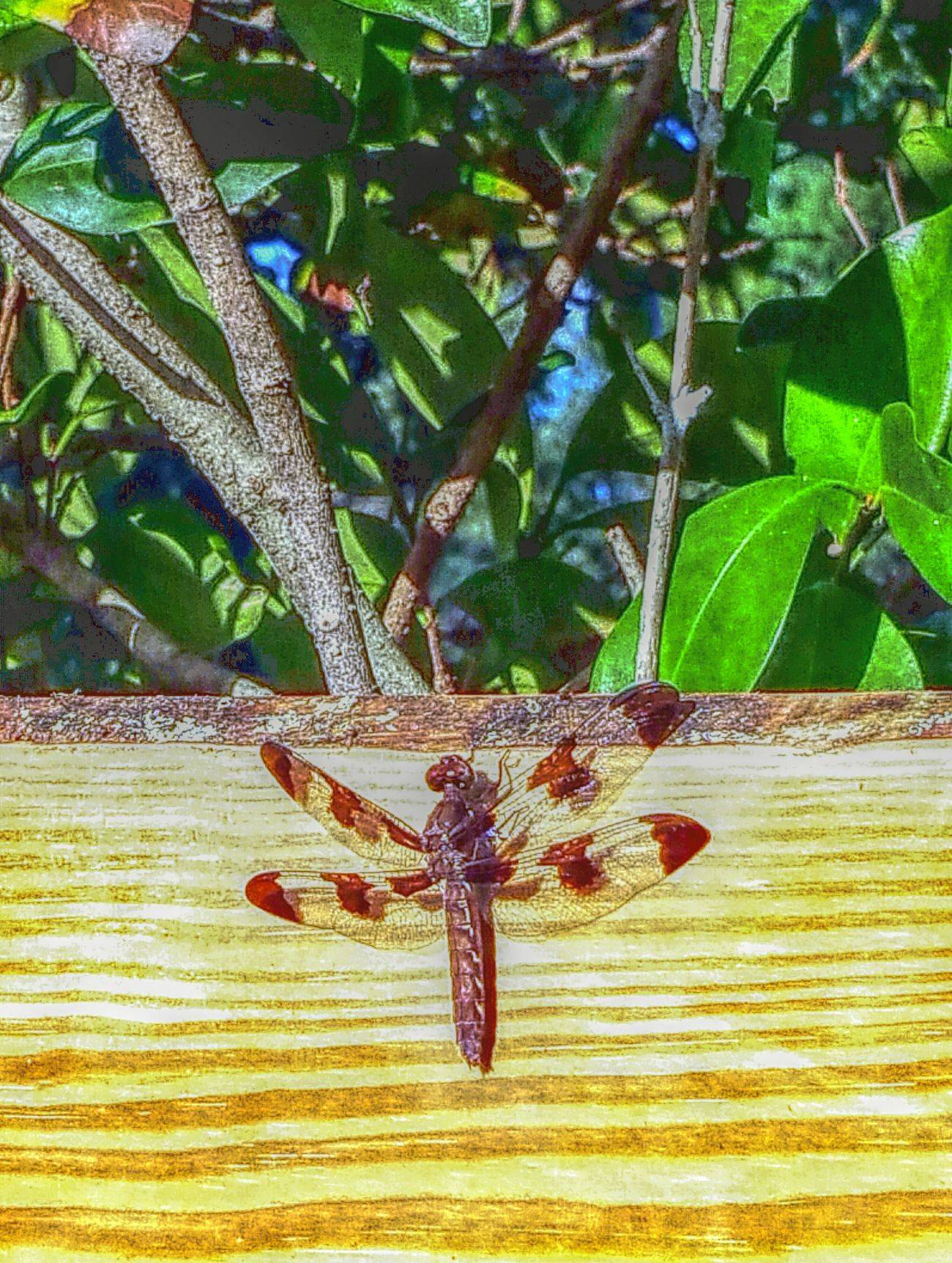 Nature On Your Doorstep Dragonfly Hanging Out Taking Photos Playing With Filters