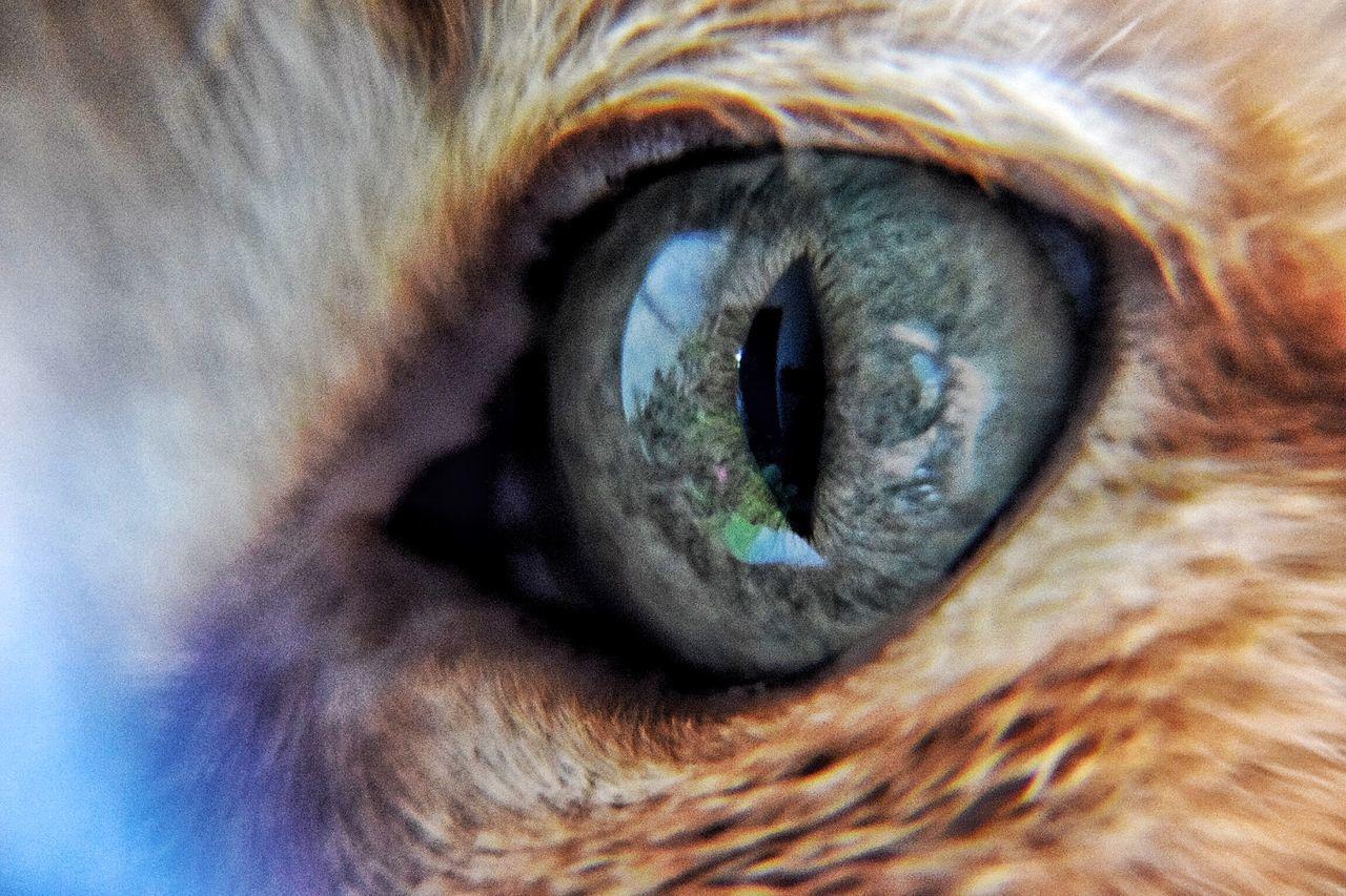 My cat Eyes Cat Eye4photography  Green Eyes EyeEm Masterclass EyeEm Best Shots Details Closeup Beautiful Taking Photos Macro Beauty