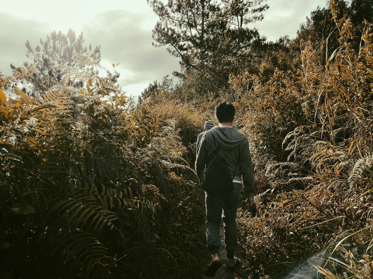 tree, growth, nature, rear view, real people, walking, sky, one person, standing, landscape, outdoors, beauty in nature, full length, day, people