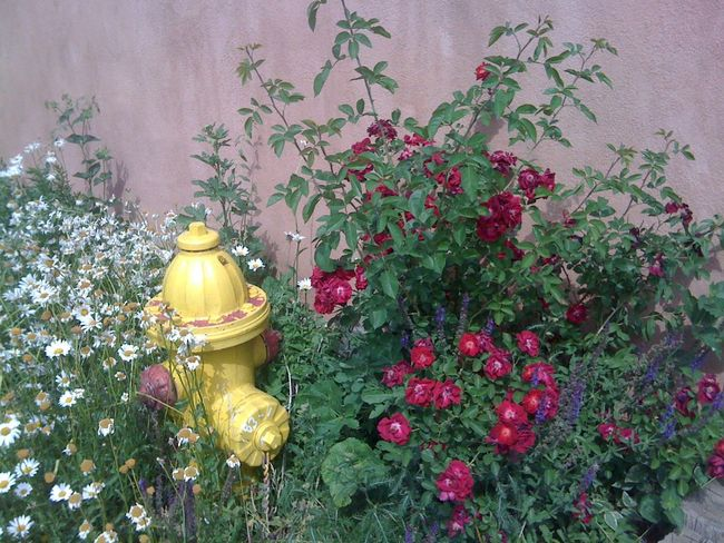 Adobe Creativity Fire Hydrant Flower Freshness Multi Colored Still Life Wall - Building Feature