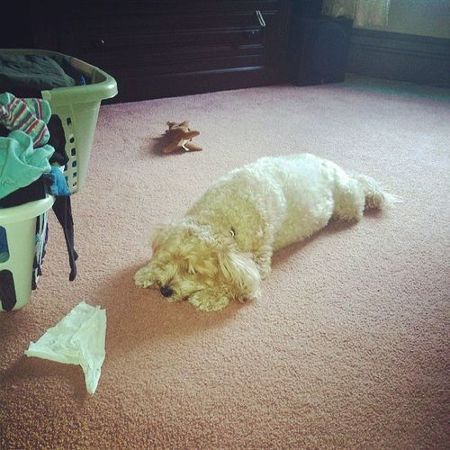 A dogs life!! Poor Champ...already worn out...LOL