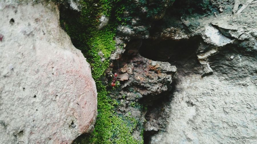 Nature Outdoors Rock - Object No People Day First Eyeem Photo Freshness Green Color Plant Beauty In Nature Close-up High Angle View 💚