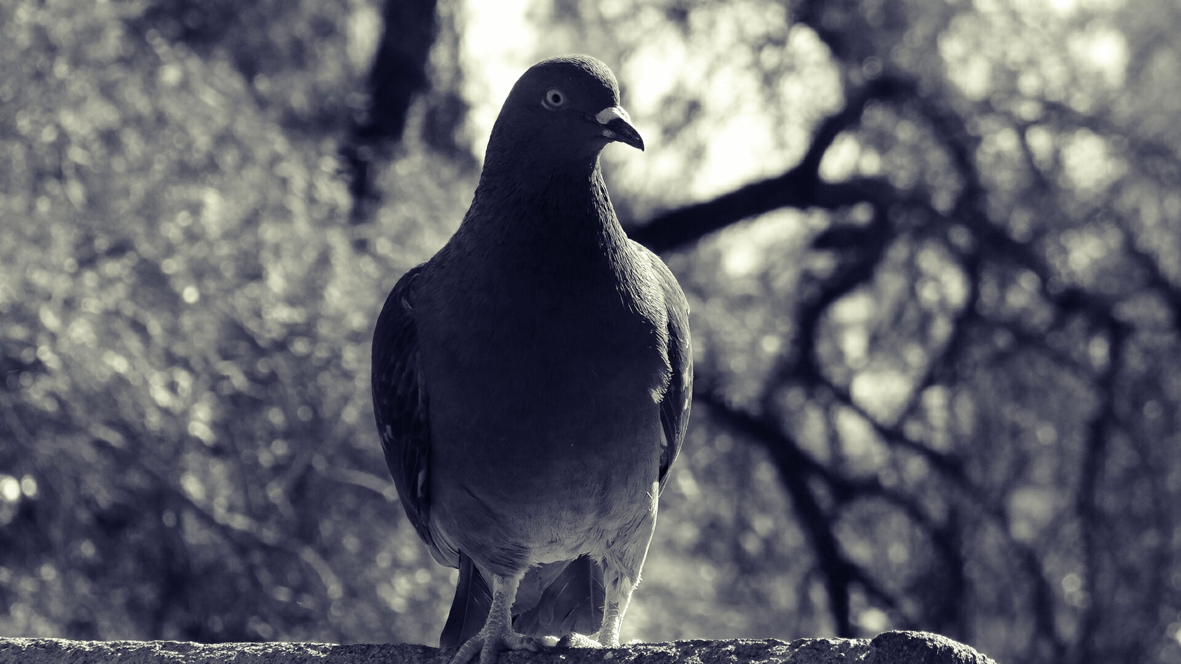 animal themes, one animal, animals in the wild, wildlife, bird, focus on foreground, perching, close-up, branch, nature, beak, full length, tree, outdoors, zoology, side view, day, animal head, no people, looking away