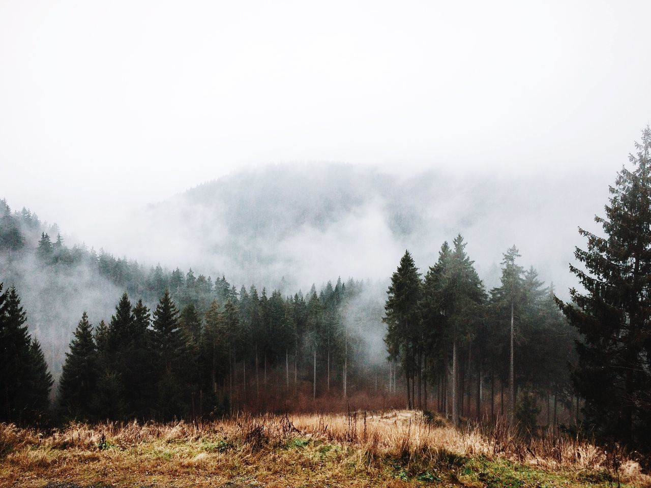 Beautiful stock photos of europe, Beauty In Nature, Day, Field, Fog