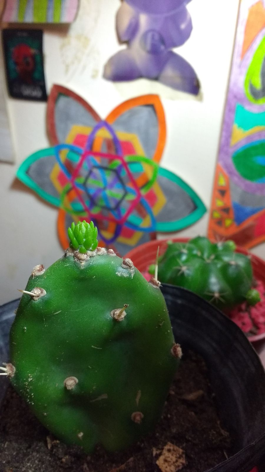 Hello World Taking Photos By Hand Detail Cactus Garden Cactusporn Cactus Plant Plants And Flowers Plants Green Colors Colorful Light EyeEm Gallery Check This Out Ya Casi