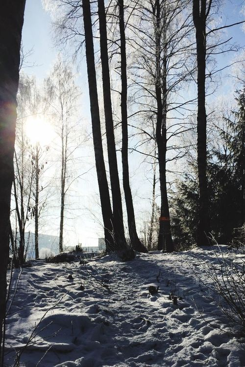 Winter Snow Cold Temperature Tree Sunlight Nature Tree Trunk Bare Tree Sunbeam Beauty In Nature Day Sun Outdoors Landscape Scenics No People Sky Discgolf Discgolfbasket