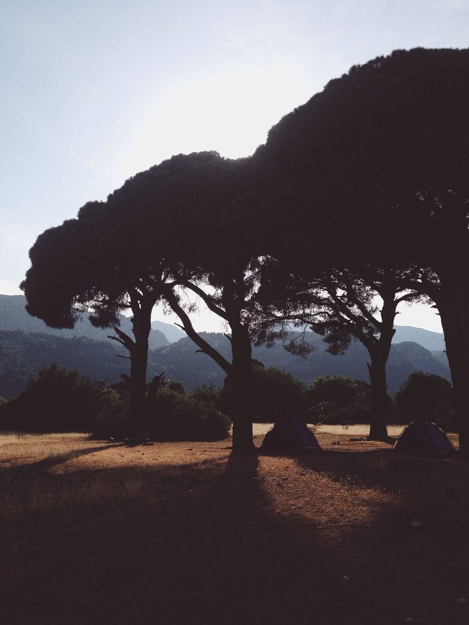 The Great Outdoors - 2016 EyeEm Awards Nature's Diversities Outdoors Camping Pinetrees Turkey Landscape Cirali Trees TreePorn