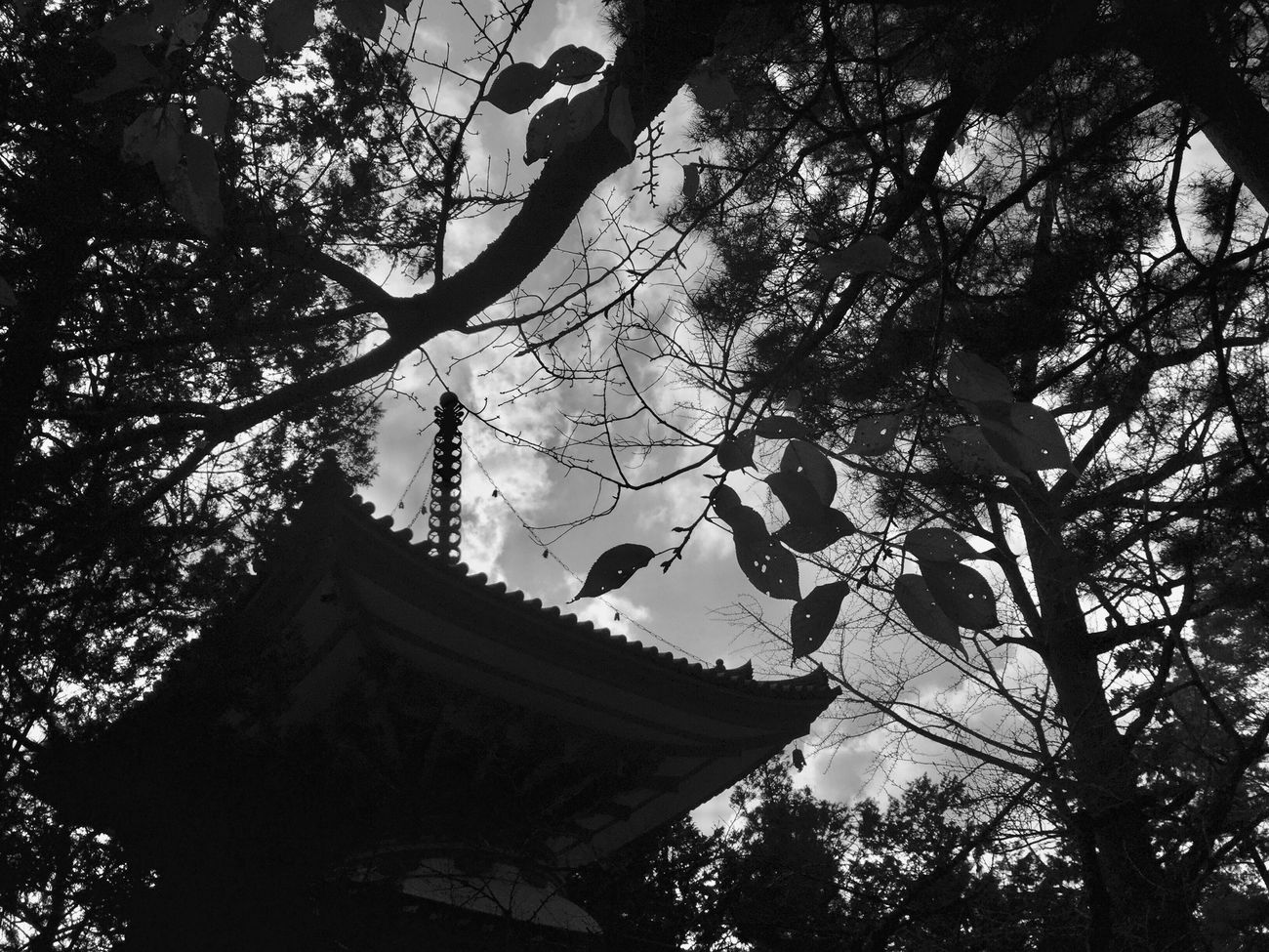 Silhouette Silhouettes Tree Nature Sky Built Structure Architecture Outdoors Building Exterior Day Street Photography Tree Beauty In Nature Leaf Nature Landscape View Sky And Clouds Black & White Black And White Monochrome Blackandwhite Leaves