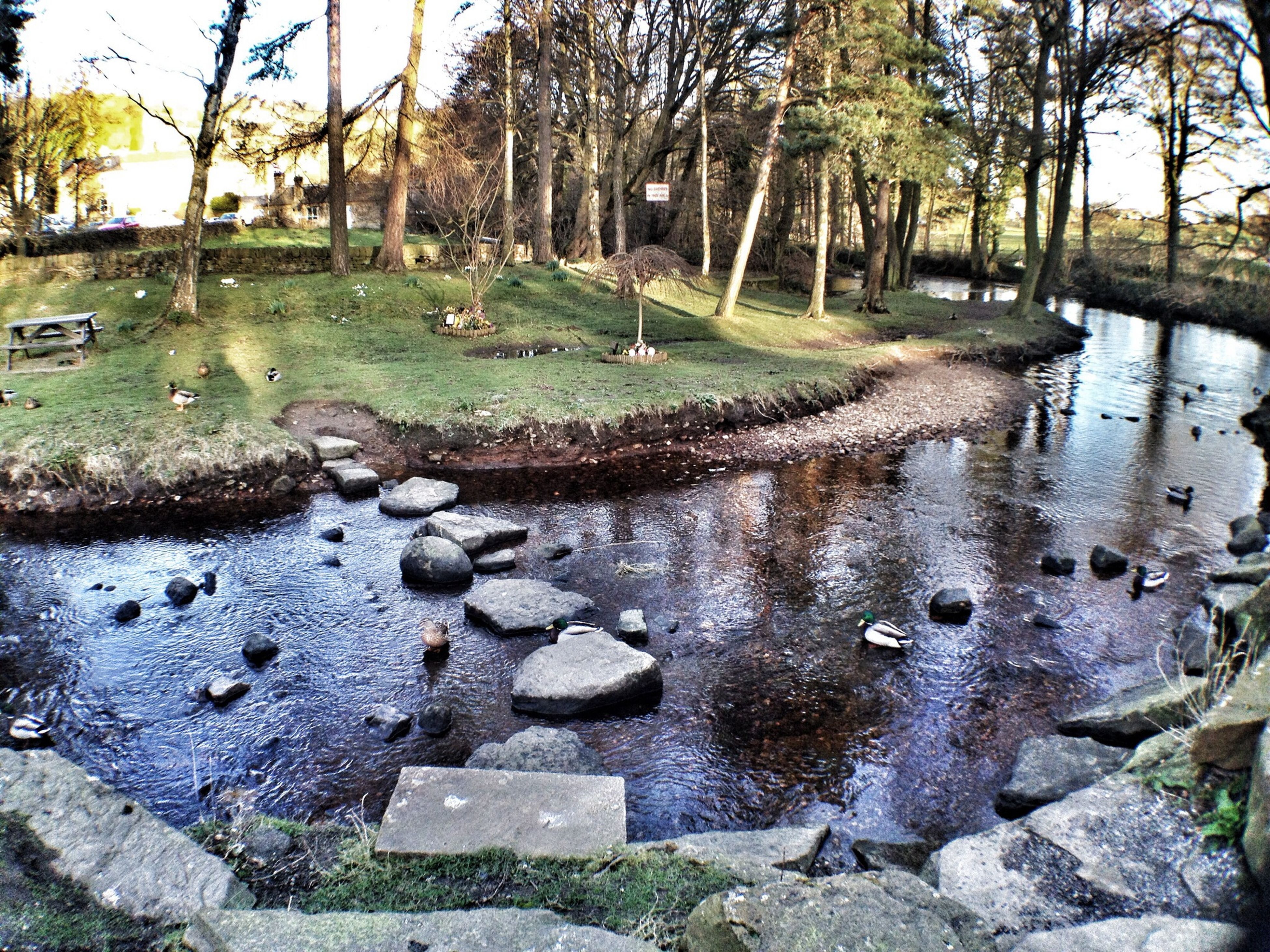 water, tree, animal themes, stone - object, nature, stone, rock - object, lake, river, day, tranquility, wildlife, outdoors, reflection, no people, stream, animals in the wild, built structure, pond, riverbank